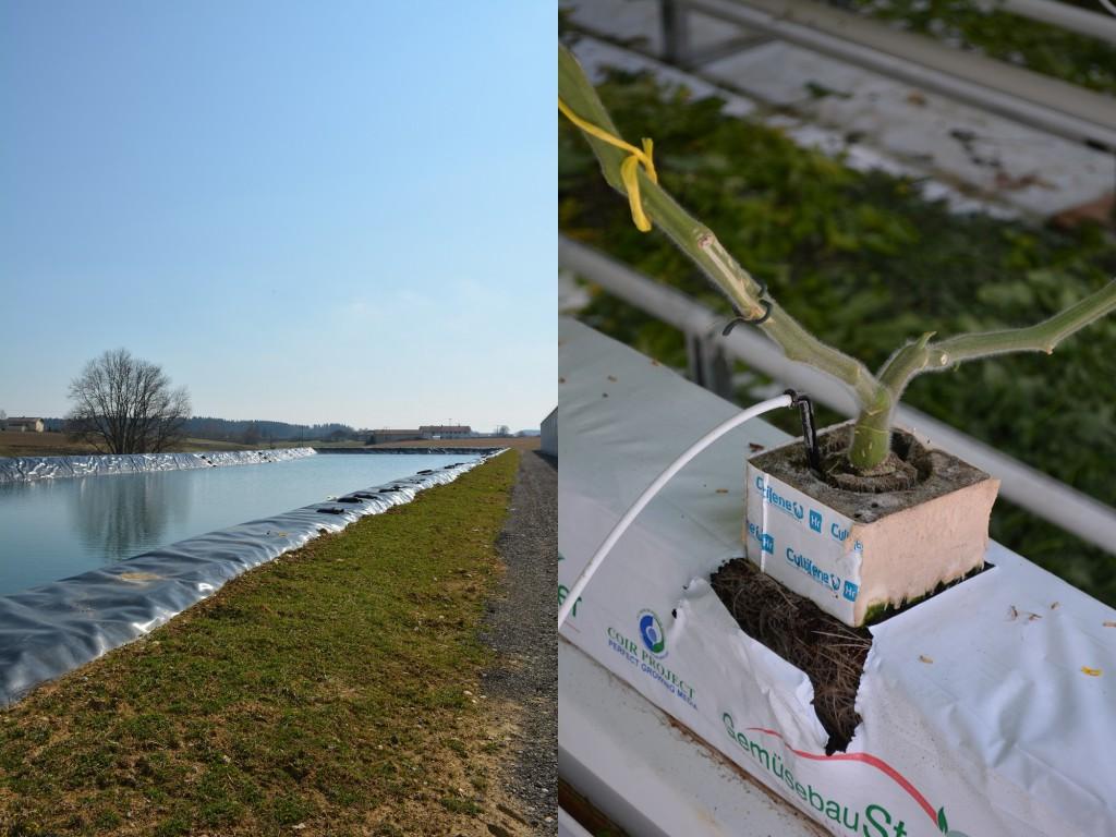 Regenauffangbecken und Spaghetti Bewässerung